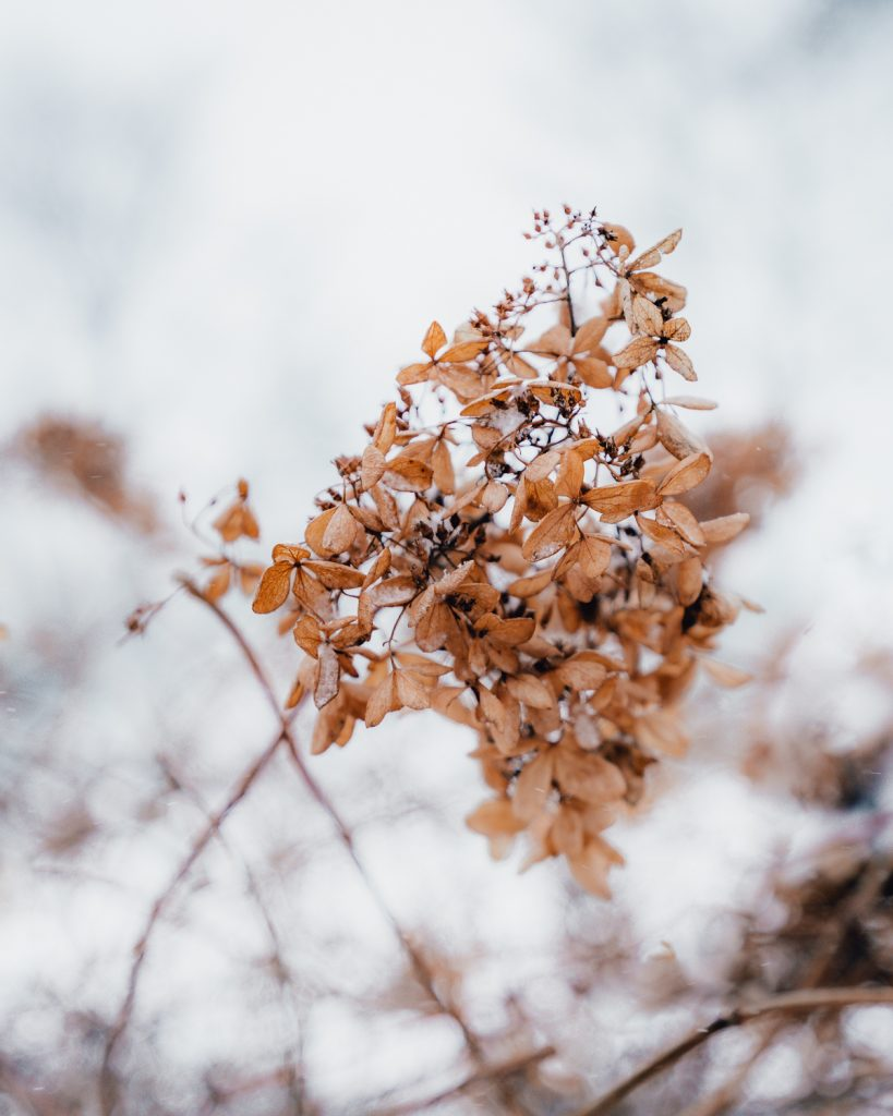 Dried flowers in a park in winter