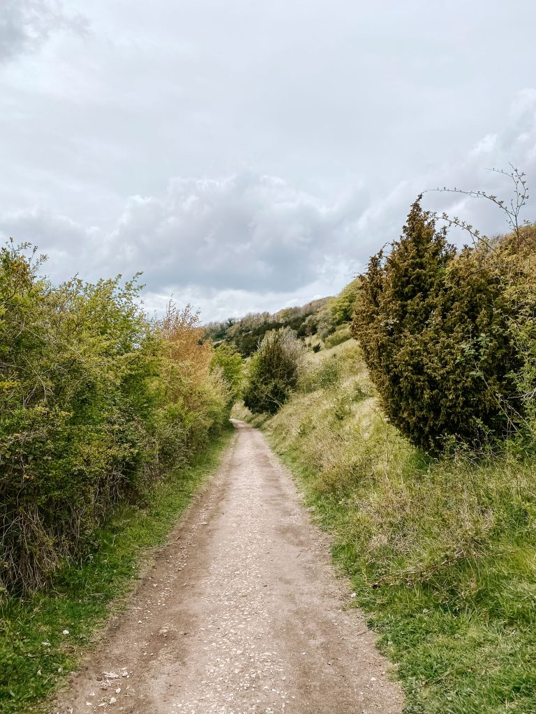A pathway through wooded hillside