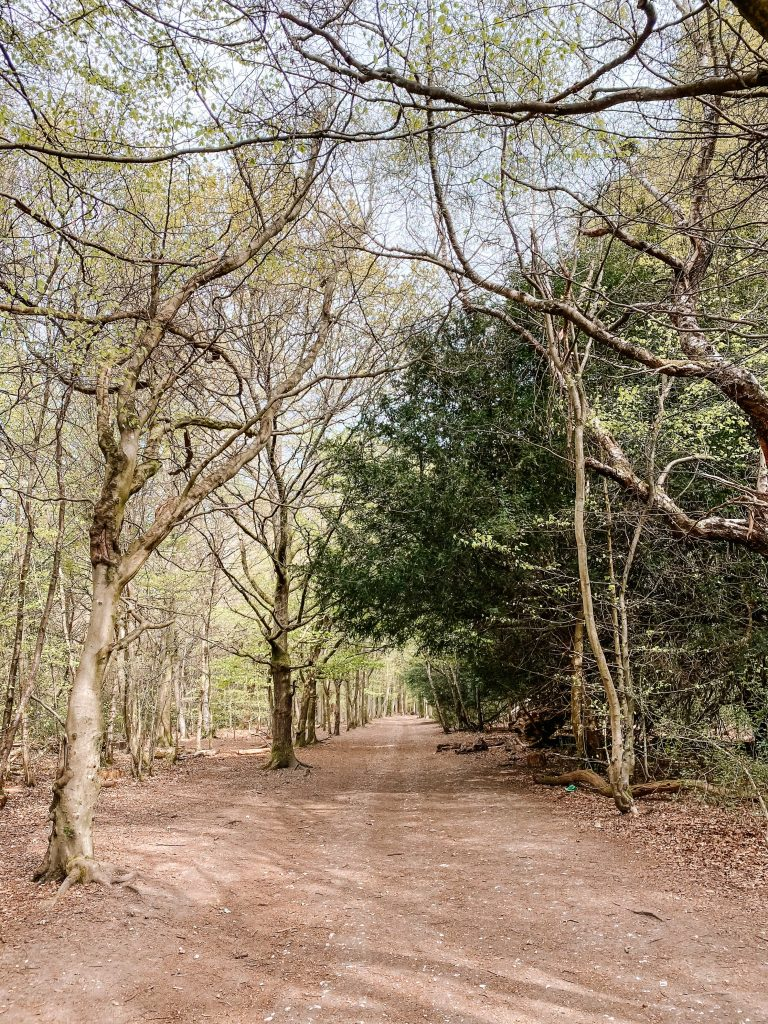 A path through the forest at Box Hill in Surrey